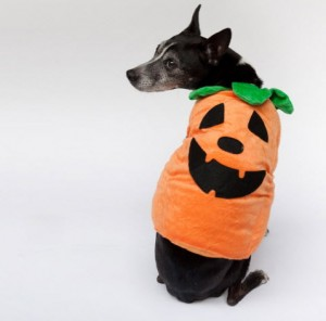 howl-ween-halloween-paws-atlanta-humane-society-october-2010-pet-portraits-pumpkin-pup