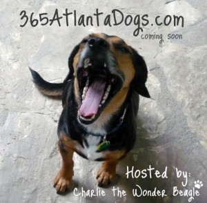 365atlanta-365atlantadogs-dogs-hosted-by-Charlie-the-Wonder-Beagle
