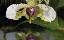 orchid-daze-liquid-landscapes-atlanta-botanical-garden-atlanta-ga