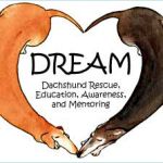 Doggie Lovers Howl for DREAM Dachshund Rescue's HowlOWeenie – Saturday, October 1, 2011 in Dunwoody