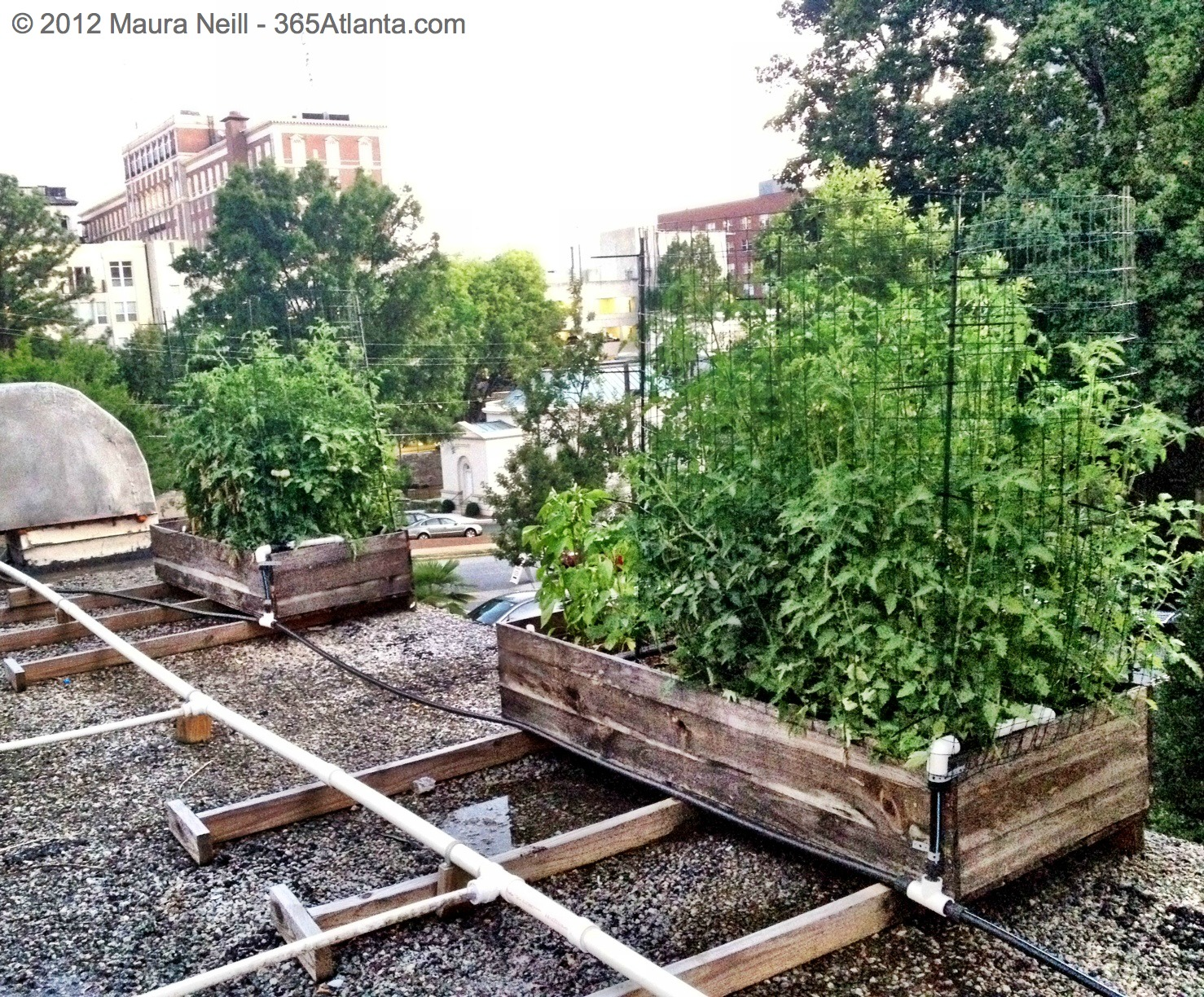 Exploring Eccos Rooftop Garden with Executive Chef Craig Richards